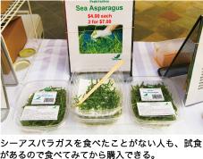 シーアスパラガスを食べたことがない人も、試食があるので食べてみてから購入できる。
