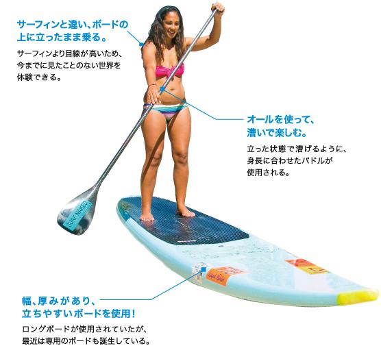 サーフィンと違い、ボードの 上に立ったまま乗る。サーフィンより目線が高いため、 今までに見たことのない世界を 体験できる。オールを使って、 漕いで楽しむ。立った状態で漕げるように、 身長に合わせたパドルが 使用される。幅、厚みがあり、 立ちやすいボードを使用!ロングボードが使用されていたが、 最近は専用のボードも誕生している。