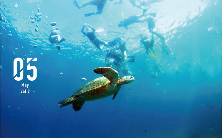 透明度45メートル以上、ウミガメに間近で会える!?<br />モロキニ島の感動シュノーケリングツアー