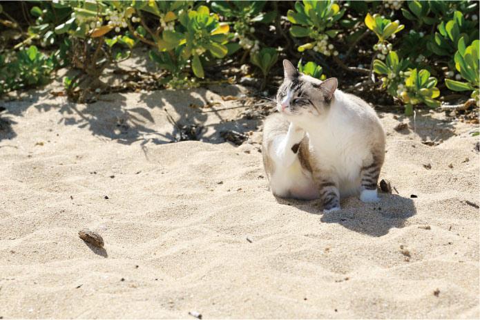 アリッサ・ウーテンに聞きました、「心をリセットするビーチはどこですか?」