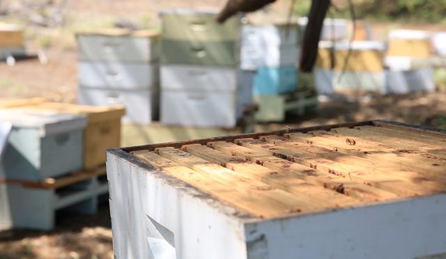 ハワイ島でしか作れない貴重な蜂蜜の収穫現場にブルータス編集部が潜入取材!